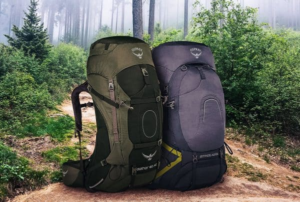 Two backpacks on trail in mountain forest